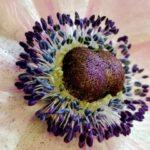 Blumenabo-Dauerauftrag, Blumento in Berikon