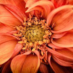 Angebot, Blumento - Blumengeschäft in Berikon