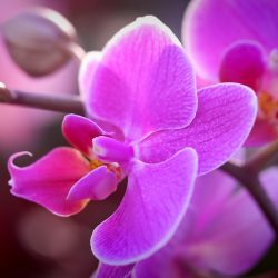 Orchideen_Blumento, Blumenladen in Berikon